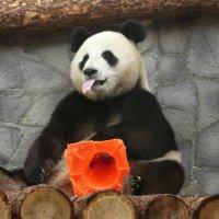 Это мой домик! :: Владимир Манкер