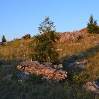 Каменные берёзки... :: Андрей Хлопонин