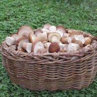 Белые грибы :: Валерий Судачок