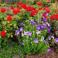 Полевые цветы, вы хрупки и нежны, вы искусной любовью в венки сплетены :: Владимир Манкер
