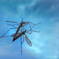 комарик. :: Светосила.