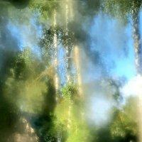 Из дачного окна :: Tanja Gerster