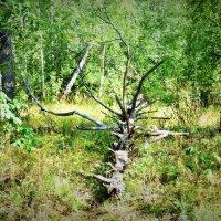 Национальный парк Таганай :: Oksana ***