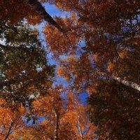 Осень — восхитительная улыбка года!!! :: Вадим Якушев