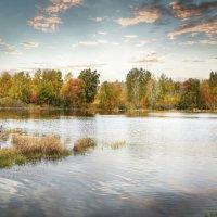 осень на даче :: Дмитрий Петровский