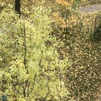 Листопад, листопад... :: Татьяна Юрасова