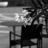 летнее кафе :: Неизвестный фотограф