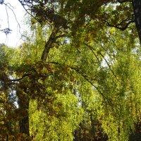 Осенний свет :: Татьяна