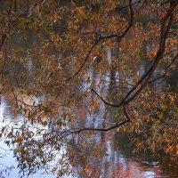 Краски осени. У пруда :: Александра Климина