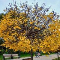 Потому что Осень - Вариация 4 :: Андрей Лукьянов
