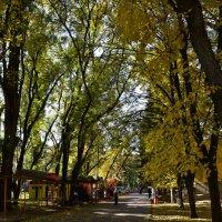 Осень в парке :: Александр