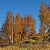 Осень рыжею лисицей пробежала по лесам... :: Людмила Alex