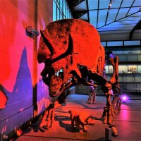 В зале динозавров :: Aida10