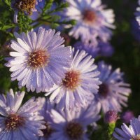 Утренние цветы :: Павел Гусев
