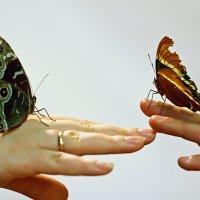 на выставке бабочек :: Дарья Казбанова