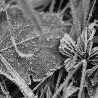 Первые заморозки :: Надежда Кохан