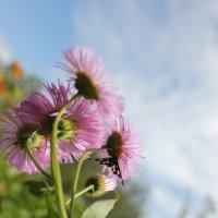 Flowers :: Irene Farkh