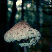 галюцогенный грибочек) :: Ирина Антонова