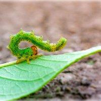 Может так скорпионом стану ?! :: Денис Антонов