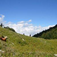 Гагры. Высота 1770 метров над уровнем моря. :: Svet_Lana ZGS