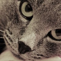Проницательный кот :: Марина Marina