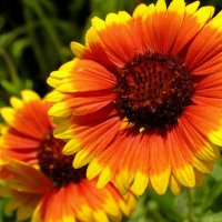 из серии цветы :: valeriy g_g