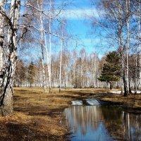 Весна :: Геннадий Ячменев