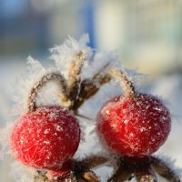 зимняя парочка :: Оксана Грищенко