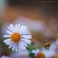 тёплый ноябрь :: Tanja S.