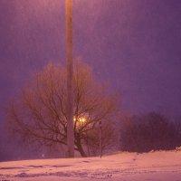 Все до фонаря, потому что все фиолетово:) :: G Nagaeva