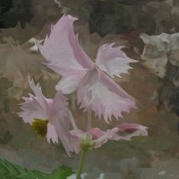цветы :: Irina