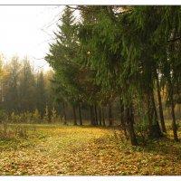 Осень_2 :: Ирина