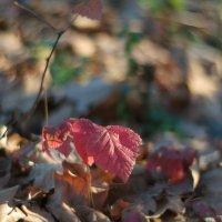 осень1 :: александр