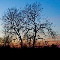 Поздний закат :: Юрий Бичеров