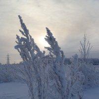 Так бывает зимой... :: НАДЕЖДА КЛАДЧИХИНА