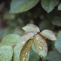 После дождя :: Larisa Oparina