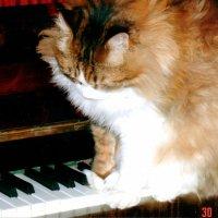 Барсик - пианист :: татьяна Филатова