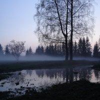Туман 1 :: Вера Кудина