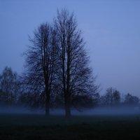 Туман 3 :: Вера Кудина