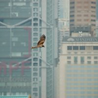 Полёт над Гонконгом :: kirm2 .