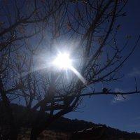 прекрасное солнце :: İsmail Arda arda