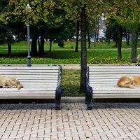 Развод по-собачьи :: Valeriy(Валерий) Сергиенко