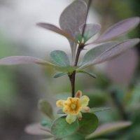Желтый цветок :: Евгения Пимченко