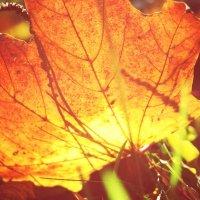 листик, листик, листопад... :: Наталья Ткачёва