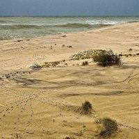 дюны :: ник. петрович земцов