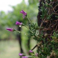дождь и сад :: İsmail Arda arda