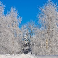 Зима :: Georg Förderer