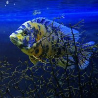 Рыбка :: Андрей Качин
