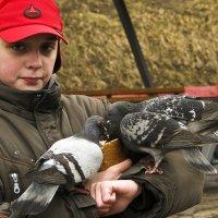 Кормление голубей :: Владимир Кроливец