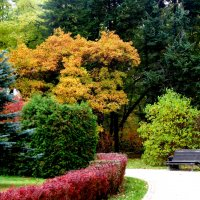 Осенний колорит :: Lilek Pogorelova